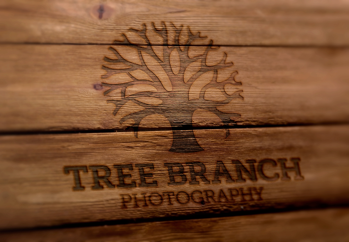 Tree Branch Photography Logo Design
