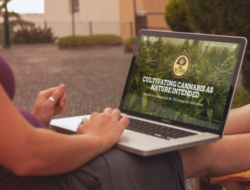 marijuana cultivation web design